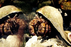 hermit-crab-reflection22-web